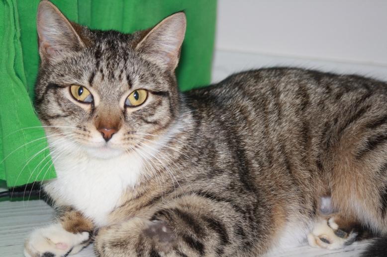 Третье веко у кошки причины лечение в домашних условиях