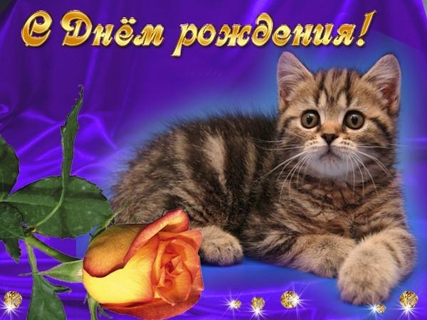 Смешных кошек, картинки и анимации с котятами с днем рождения