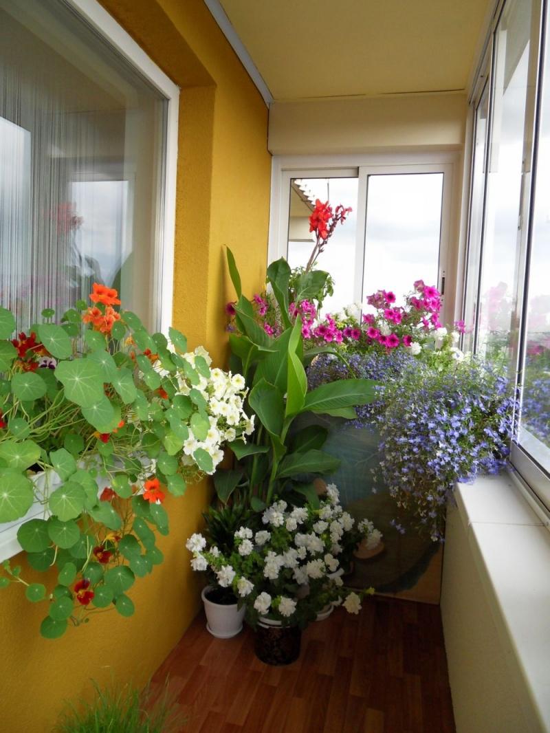 Украсить балкон - какие растения? - все страницы - обсуждени.