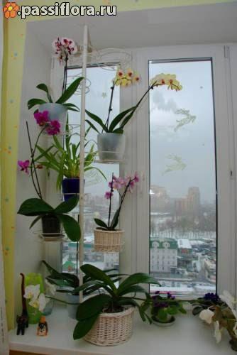Стойка-распорка для цветов на подоконник