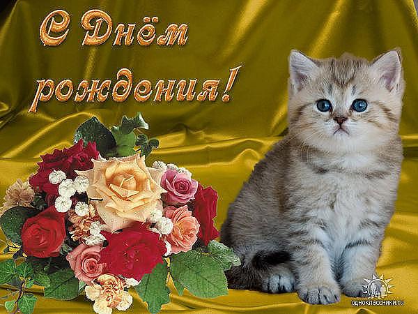 Красивые открытки с днем рождения для женщин с кошками