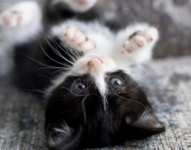 черно белые фото котята