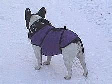 Выкройки одежды для собак В холодную погоду бульдогам нужно одевать теплый комбинезон или попонку.  Т.к. во многих...