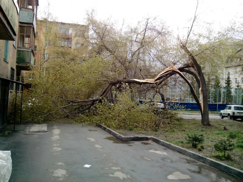 образец письма на спил аварийного дерева