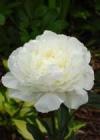 ...быстро качественно. заказать цветы для девушки срочная доставка ковель.