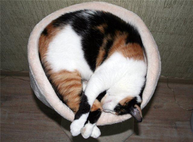 бойтесь беременная кошка пришла в дом приметы это компенсация расходов
