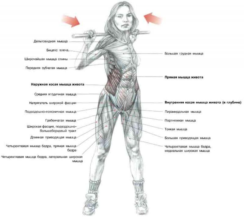 Основные мышцы пресса - это наружные косые мышцы (НКМ), внутренние косые (ВКС) и прямая мышца живота.