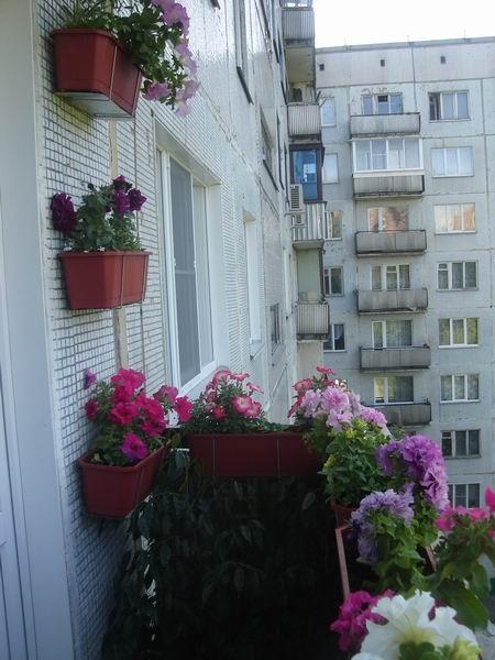 zasadil-na-balkone