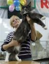 У нас родились первые котят от нашего Датского принца DK Aloa`s Esteban.