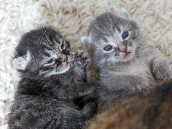 двухнедельные котята фото эффект можно получить