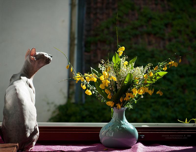 Открытку онлайн, открытка с днем рождения лысый кот