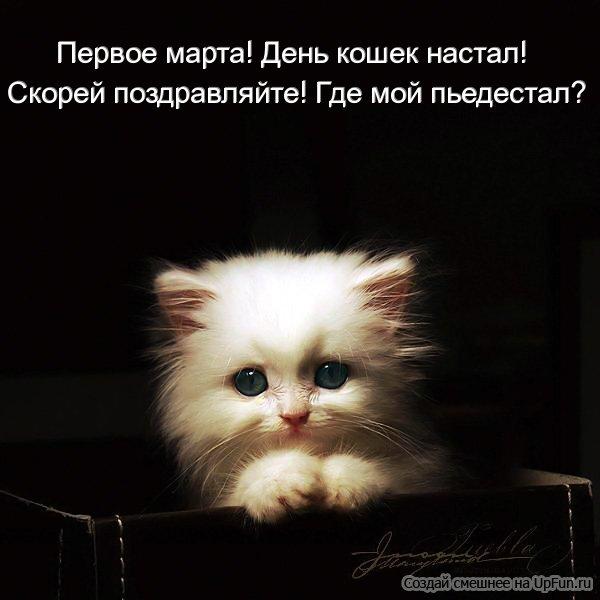 Поздравления с всемирным днем кошек 72