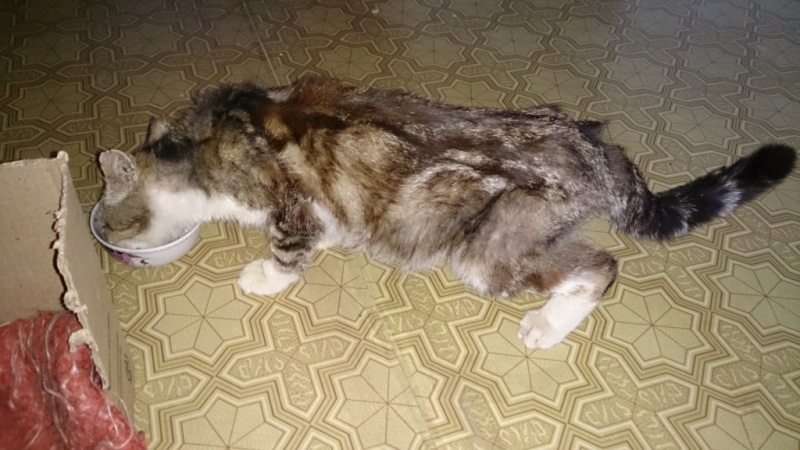 Старенький кот похудел