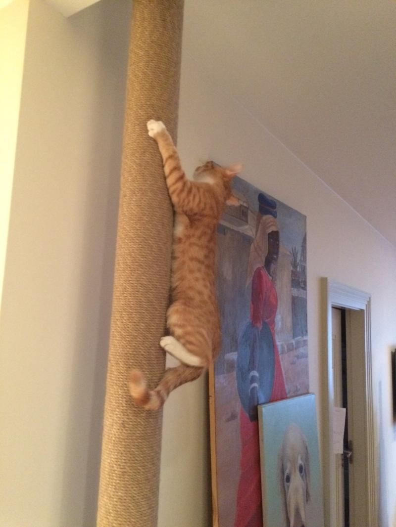 Когтеточка напольная для кошек своими руками Вопрос-Ответ