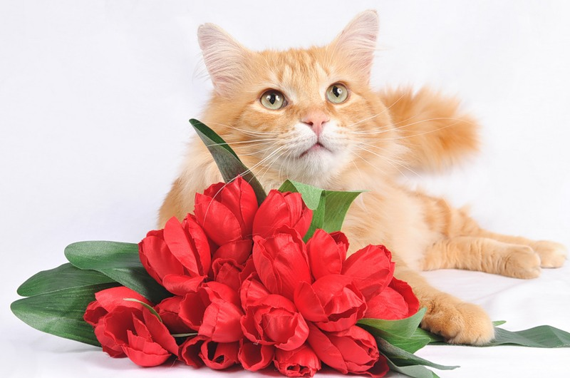 Картинка с днем рождения кот с цветами, открытки библиотека картинки