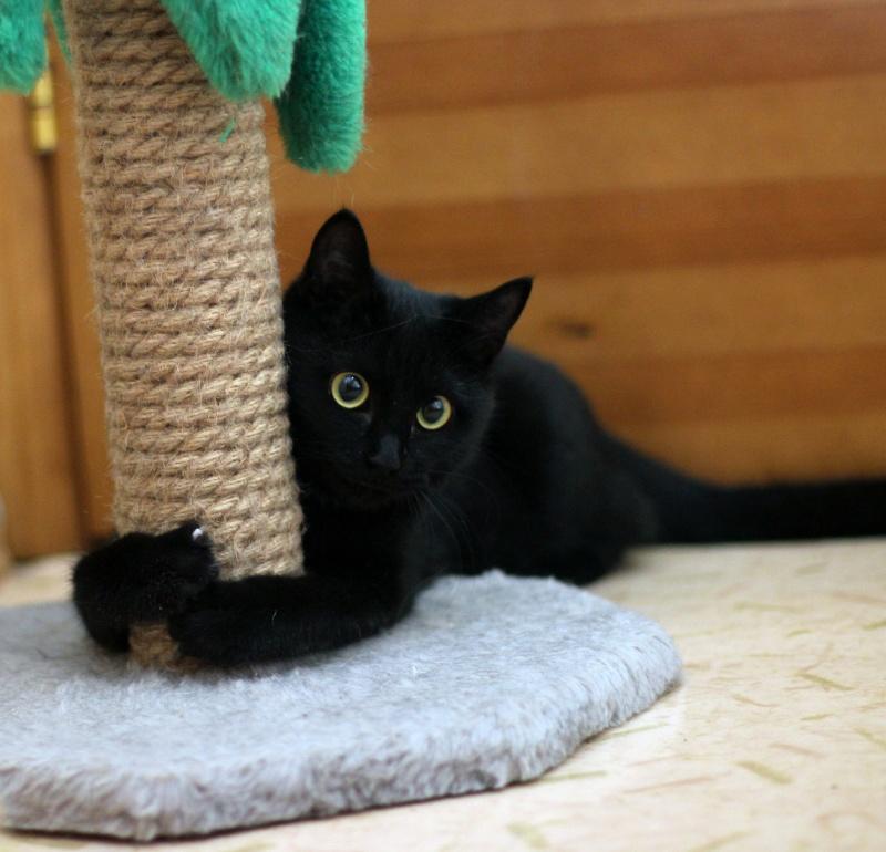 знак черная кошка в доме фото можете