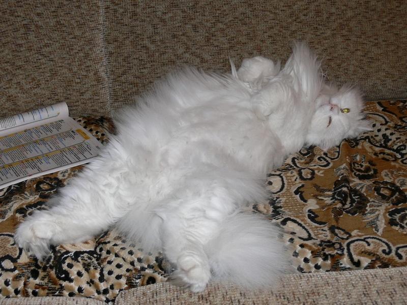Кот том подстрич