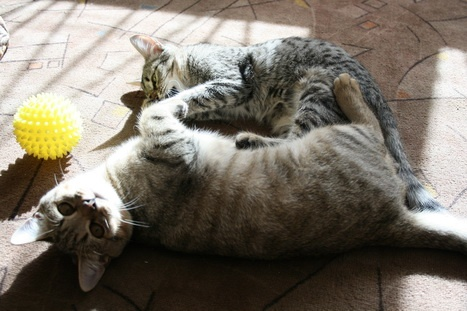 - Новосибирск 1. Котята Антошка и Аришка ищут дом!
