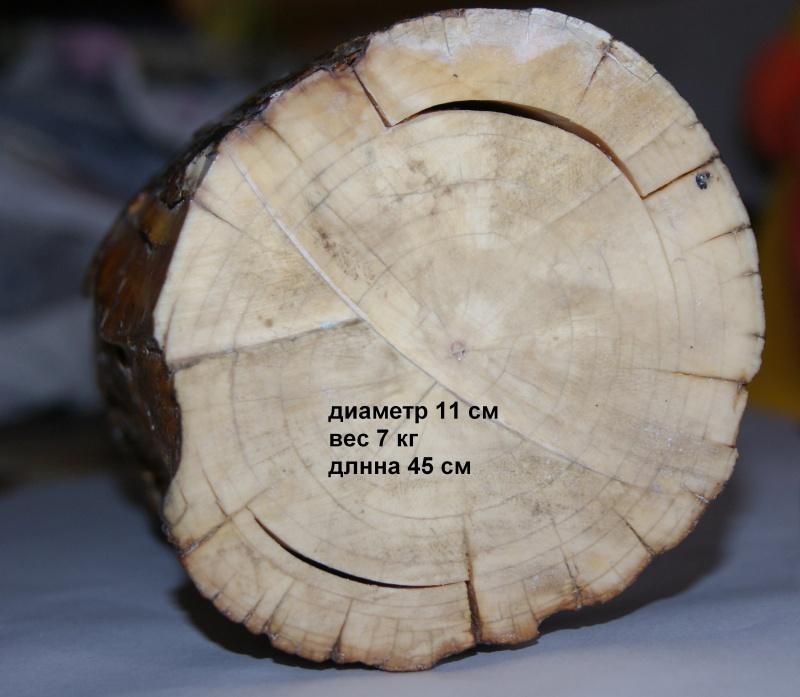 Кусок бивня мамонта 1 2 копейки серебром 1840 цена