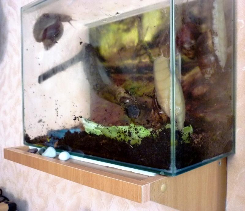 Как сделать аквариум для улиток