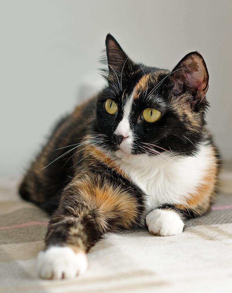 это фото трехцветной кошки с котятами температура воздуха