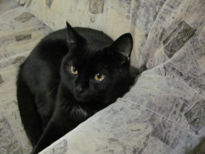 Когда забежал чёрный кот в доме