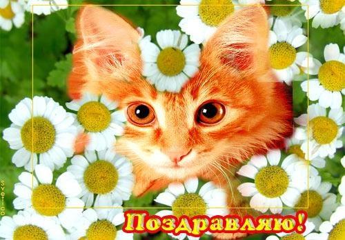 С днем рождения с рыжим котом