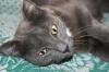 - Новосибирск - Отдам очаровательную ласковую кошку Дуняшу в добрые руки...