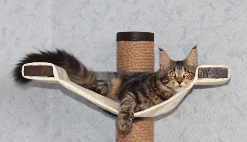 Когтеточка своими руками кошек - Daurskiykadet.ru
