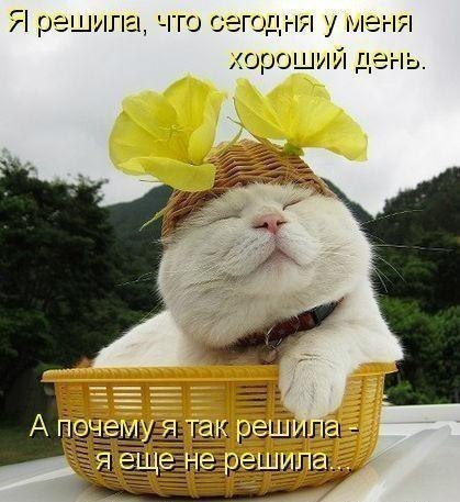 http://forum.ngs.ru/preview/forum/upload_files/dcd344f7d51cd89468f8faee7b7af62c_df8f783d51bcf0be6060437cc900eeee_133024493321_800px.jpg
