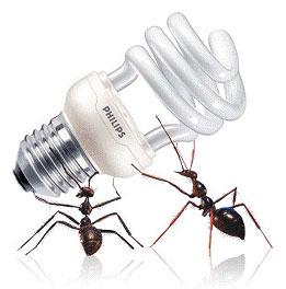 В энергосберегающих лампах или компактных люминесцентных лампах стартер уже запаян в цоколь.  Один из вариантов схемы...
